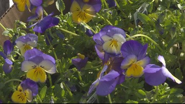 Proctor's Garden: Go ahead and plant