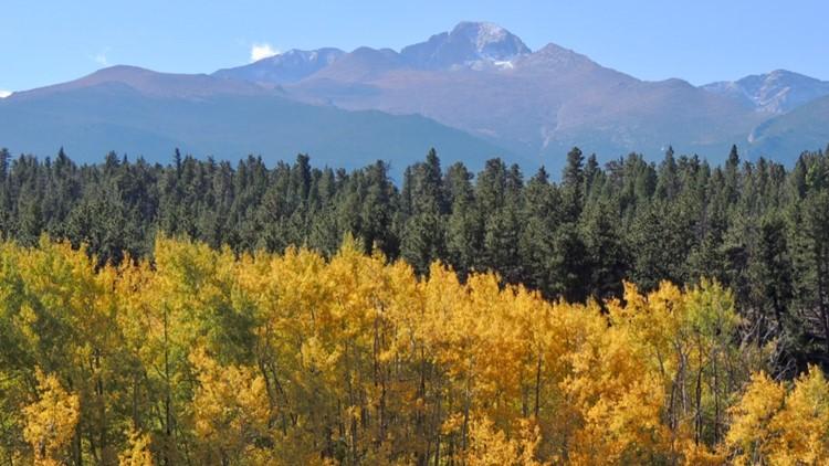 elk, aspen and Longs Peak at Rocky Mountain National Park fall aspen leaves