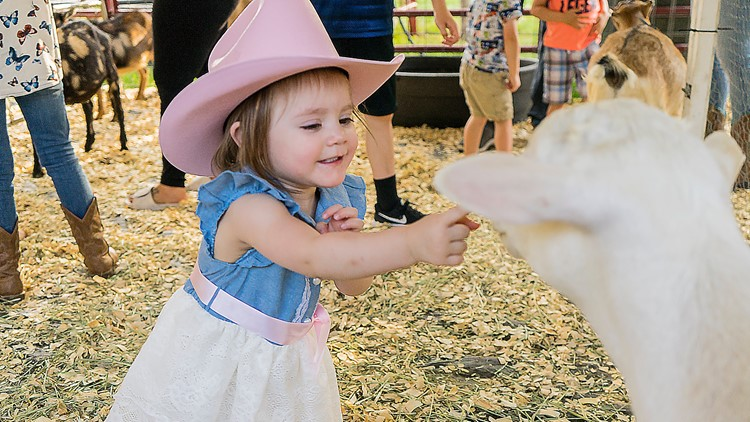 Greeley Stampede 2019 petting zoo goat