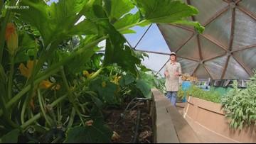 Leadville nonprofit grows food above 10,000 feet