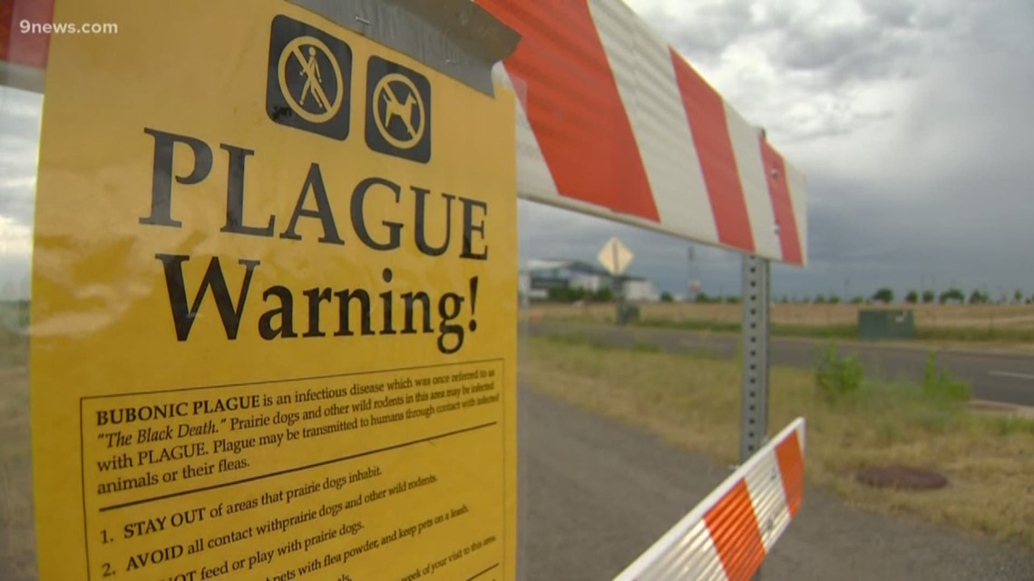 Rocky Mountain Arsenal remains closed after prairie dogs test positive for  plague