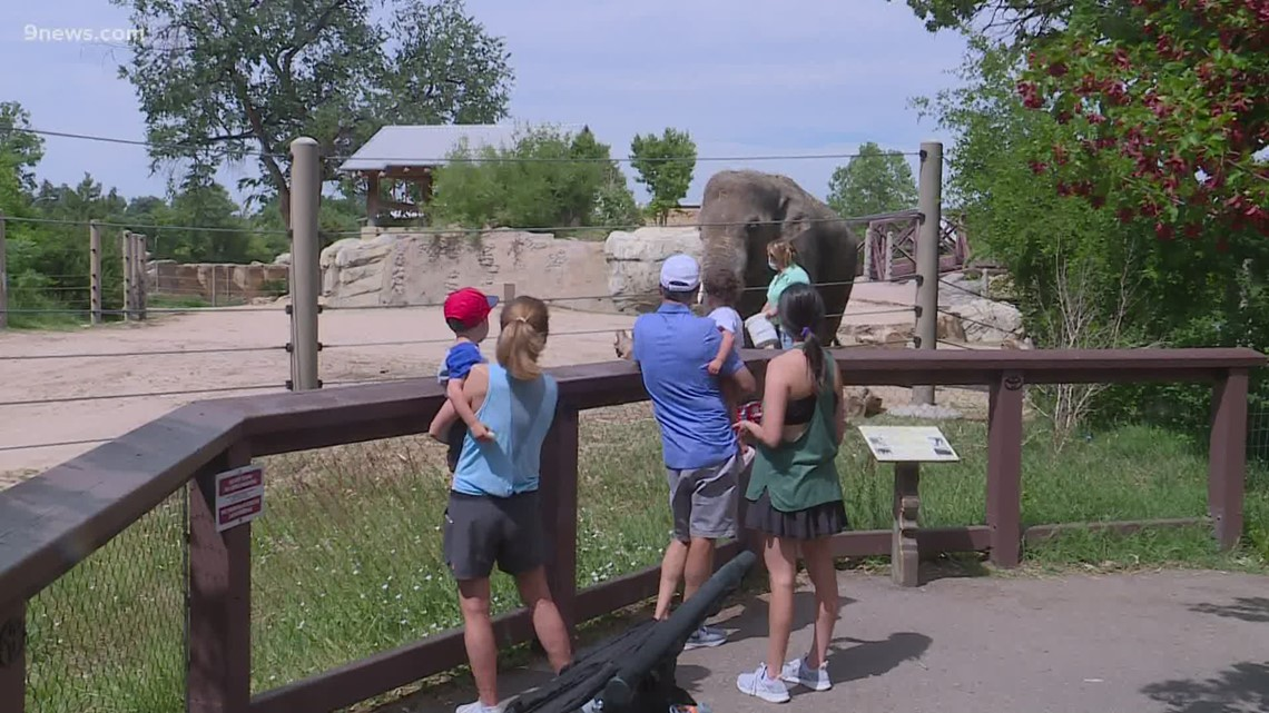 Denver Zoo losing millions asks city for permission to increase capacity