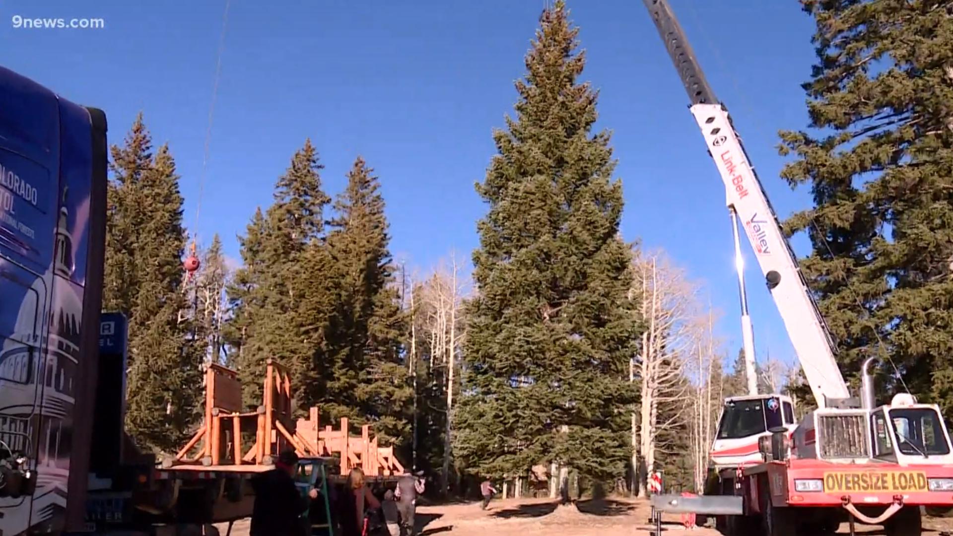 U.S. Capitol 2020 Christmas Tree harvested near Delta, Colorado