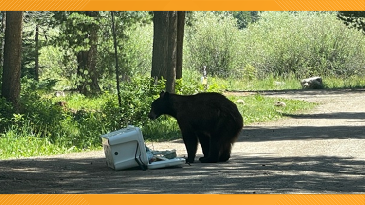Bear activity forces Colorado campground to only allow hard-sided campers or trailers