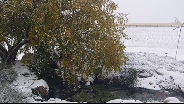 How to protect your trees from the early-October snowfall