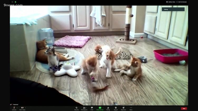 Petline: Basket of kittens looking for homes in Colorado