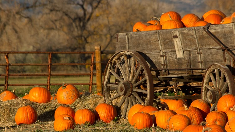 An old rustic cart filled with pumpkins on a fall day harvest farm festival pumpkin