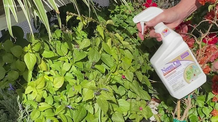 Proctor's Garden: Combatting indoor plant pests