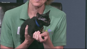 You can adopt this feisty little Black Panther