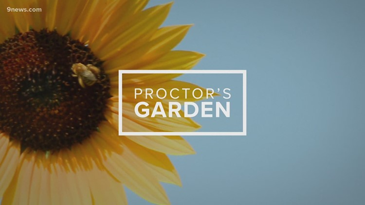 Caring for vegetable garden in summer heat