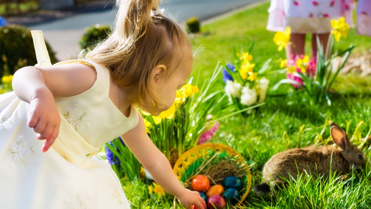 Children on an Easter Egg hunt on a meadow in spring, in the foreground a living Easter bunny is waiting and a girl finds Easter egg eggs hunt