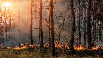 Prescribed burns underused to reduce wildfire risks, study says
