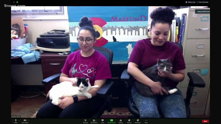 Petline: Two cats looking for their forever home