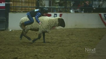 Holding on tight under the bright lights of the National Western Stock Show