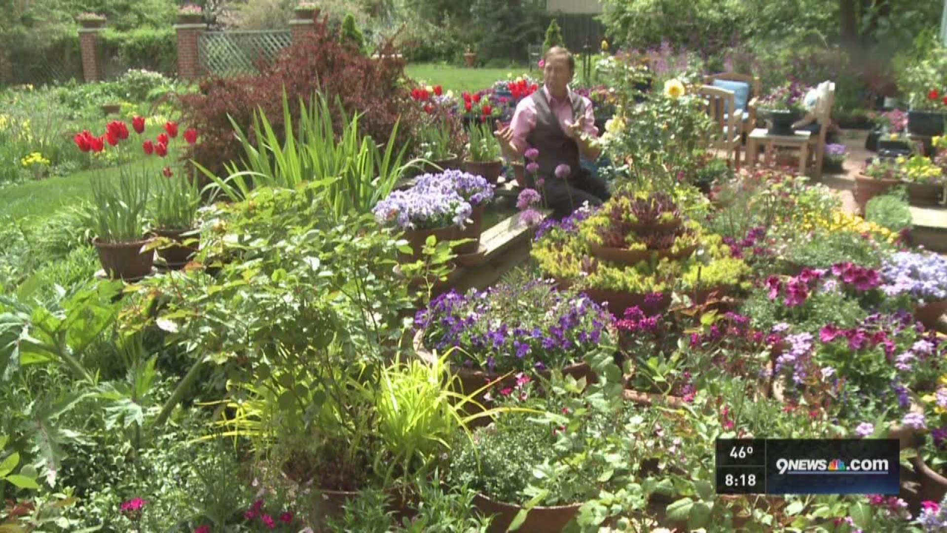 Proctor Time To Plant Petunias 9news Com