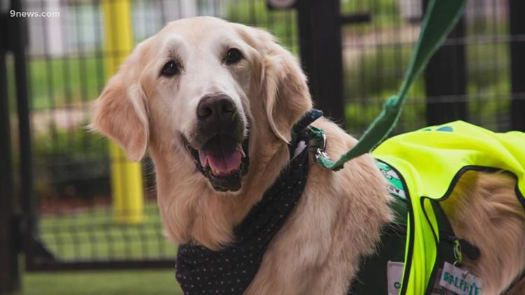 Service dog at Children's Hospital retires after comforting thousands of children