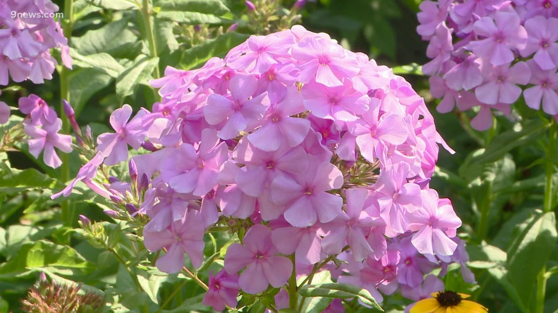 Proctor's Garden: Great late bloomers
