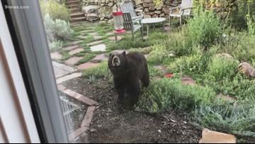 Bear climbs out of dumpster, attacks man in Aspen