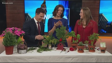 Proctor's Garden: Natural gifts for the holiday season parties