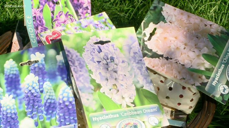 Bulbs to plant in your garden this fall