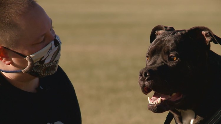 A veteran's service dog helped her during her recovery from cancer. Now she's helping him with a similar diagnosis