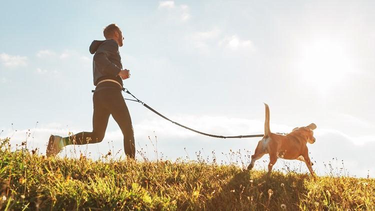 dog jog running dogs pets cute dog
