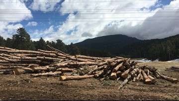 Need firewood? Jeffco Open Space can help