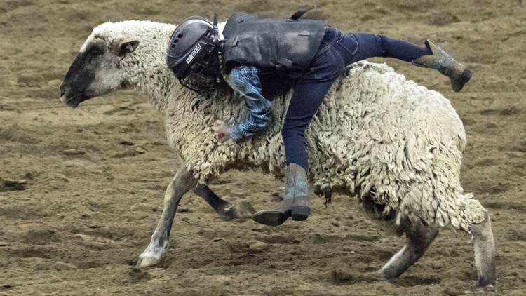 National Western Stock Show mutton busting
