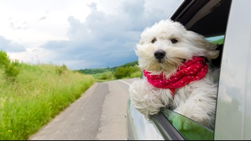 Denver one of seven cities to pilot new 'Uber Pet' feature