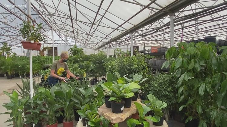 Proctor's Garden: Navigating your local garden centers
