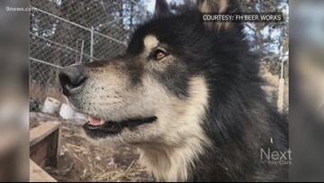 You can meet a pair of wolves at a Colorado Springs brewery this week