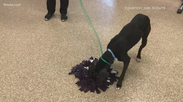 Girl Scouts make snuffle mats for dogs at Aurora shelter