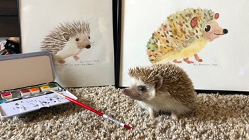A Colorado family has been taking really extra photos of their hedgehog named Steve