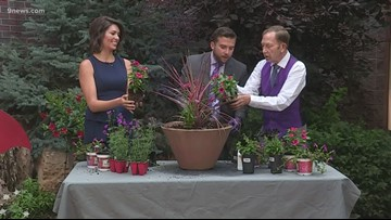 Proctor's Garden: Putting Steve's planting skills to the test