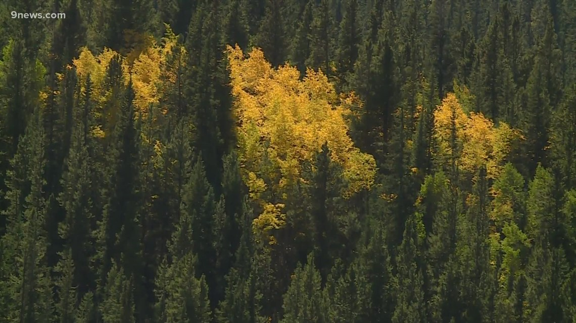 Warm weather could slow fall colors in Colorado mountains