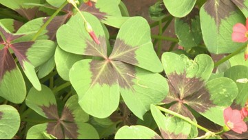 How great foliage can enhance your flowers