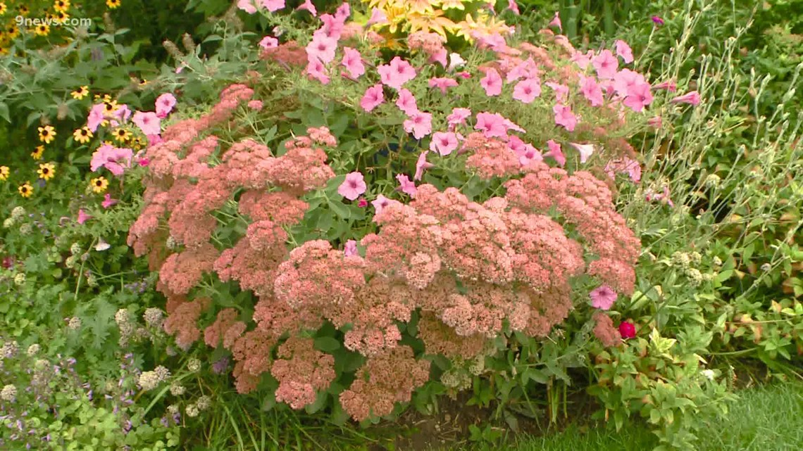 Proctor's Garden: How to turn drab to fab