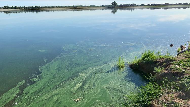 Toxic blue-green algae found at Sloan's Lake