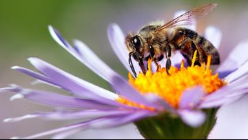 Quick and cheap ways to attract pollinators to your yard