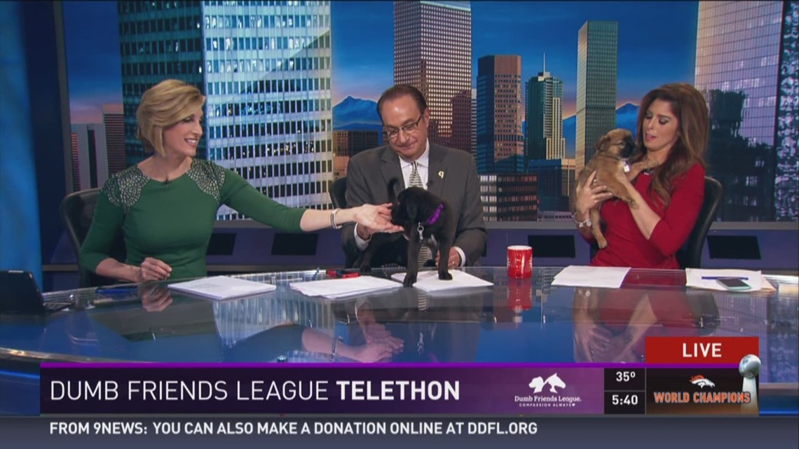 Puppies Take Over The Anchor Desk