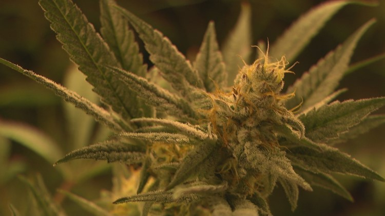 Past conviction offers couple new opportunity to deliver marijuana in Denver