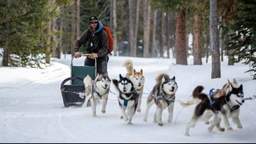 Colorado dog sled guide preparing for Wyoming's Stage Stop