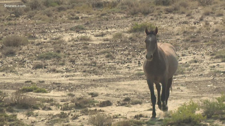 Historic Sand Wash Basin wild horse gather ends with questions and concerns