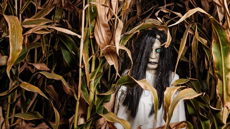 a dummy monster girl figure in corn stalks haunted house corn maze