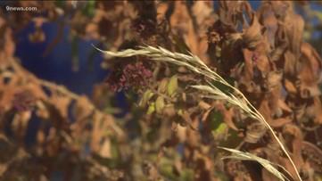 Proctor's Garden: Avoid unnecessary and harmful garden tasks