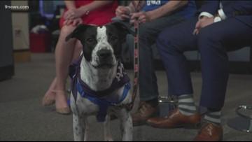 Petline 9: Jada the dog needs a home