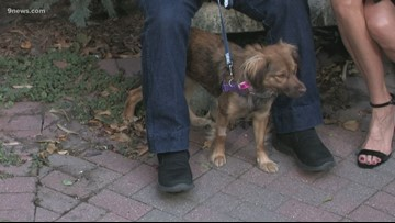 Petline9: Dee is 1, has wonderful manners and is looking for a home