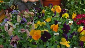 Adding color to your autumn garden