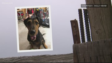 A family in Weld County is looking for the person they say beat their dog to death earlier this week