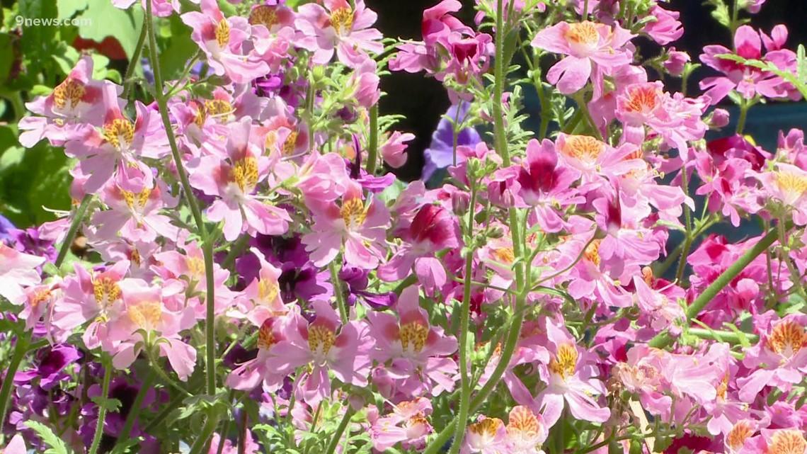 Proctor's Garden: June garden highlights
